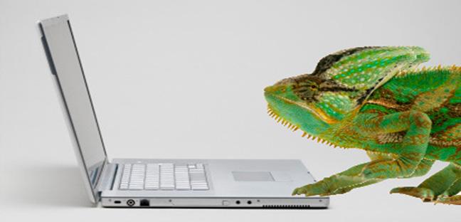 Lizard on a laptop computer