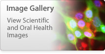 Image Gallery - View Scientific and Oral Health Images