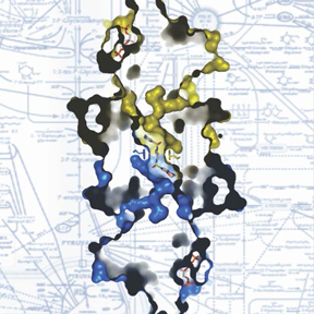 PKM2 enzyme