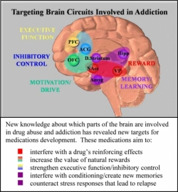 Targeting Brain Circuits Involved in Addiction figure
