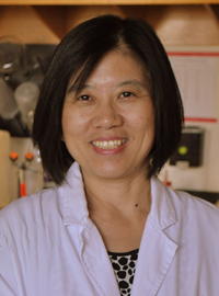 Jia Bei Wang, M.D., Ph.D.