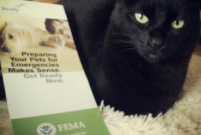 "A photo of a cat and a ""Preparing Your Pets for Emergencies"" brochure."