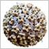 illustration of Human PapillomaVirus (HPV)
