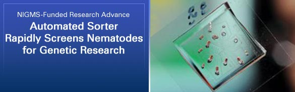 NIGMS-Funded Research Advance: Automated Sorter Rapidly Screens Nematodes for Genetic Research