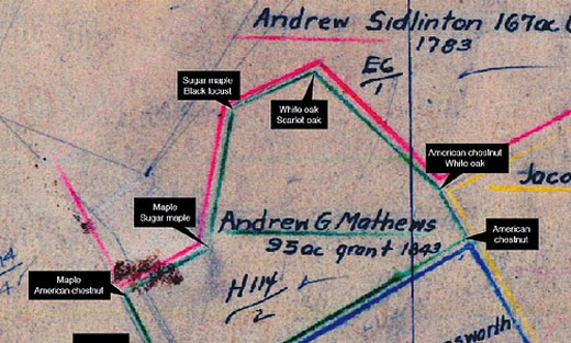 Trees on historic survey maps were used to determine property lines (photo credit: Melissa Thomas-Van Gundy, U.S. Forest Service)
