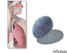 Ilustración de las vías respiratorias y el virus de la gripe