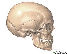 Ilustración de un cráneo y la mandíbula