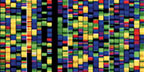Colorful representation of DNA building blocks
