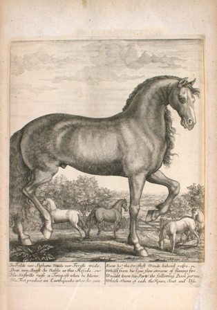 Engraving of a horse by Nicholas Yeates (active 1669-1683) in Andrew Snape's The Anatomy of an Horse, printed in London in 1683.