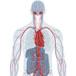 Target Organ Systems
