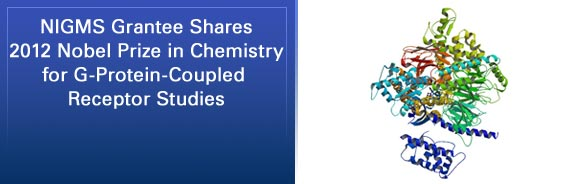 NIGMS Grantee Shares 2012 Nobel Prize in Chemistry for G-Protein-Coupled Receptor Studies
