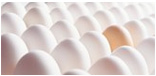 Eggs & Dairy Products