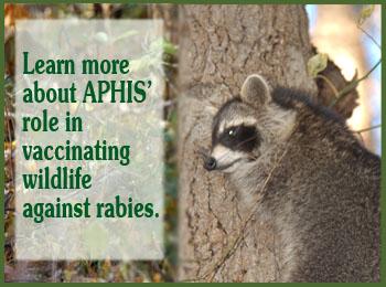 rabies management slide