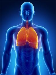 Ilustración de los pulmones en la parte superior del cuerpo de un hombre