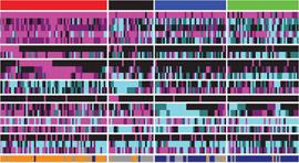 Imagen de tumores de pulmón de células escamosas agrupados por subtipo de expresión génica.