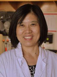 Jia Bei Wang, M.D., Ph.D.