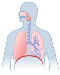 Anatomy illustration