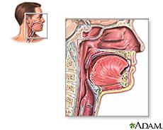Illustration of throat anatomy