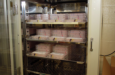 Cell plates in an incubator