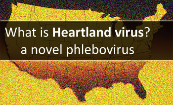 What is Heartland virus? a phlebovirus