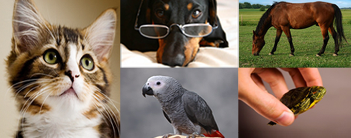 montage of pet photos: cat, dog, bird, horse, turtle