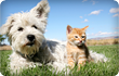 Cat and dog on grass