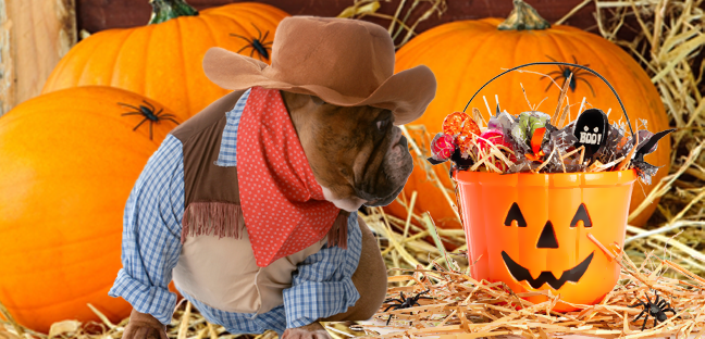 dog dressed as a cowboy looking at a container full of candy
