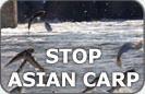 Stop Asian Carp