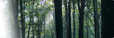 Northern Michigan Woodland