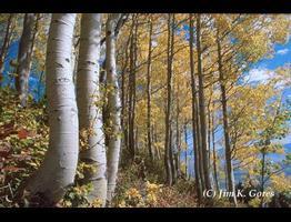 Wyoming's Natural Beauty