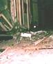 1983Bomb