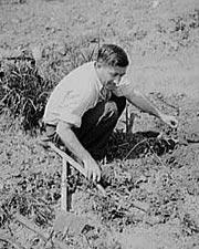 Botkin working       in his Victory Garden, Washington, DC, June 1943