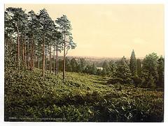 [Brackendale, Estade, Camberley, England]  (LOC)