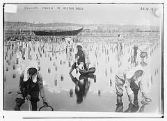 Belgian women in oyster beds  (LOC)