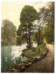 [Woods, Bolton Abbey, England]  (LOC)