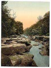 [Woods, the Strid, Bolton Abbey, England]  (LOC)