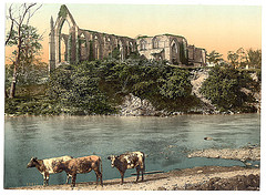 [Abbey from the river, Bolton Abbey, England]  (LOC)