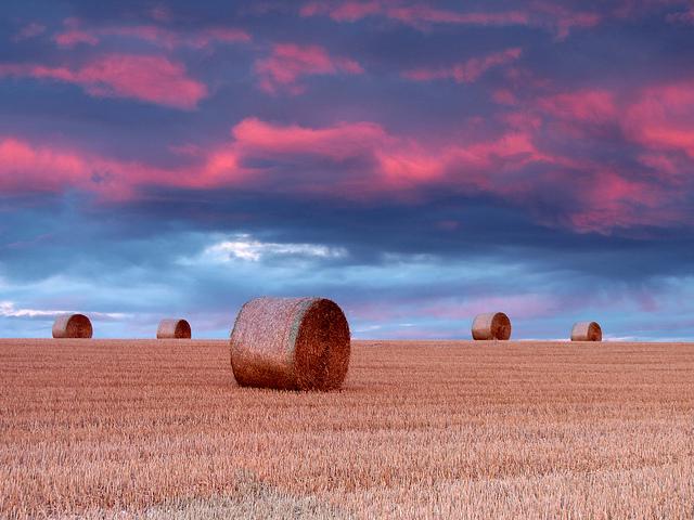 Five Hay Bales.