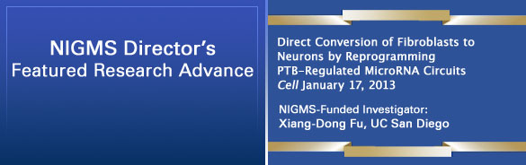 Direct Conversion of Fibroblasts to Neurons by Reprogramming PTB-Regulated MicroRNA Circuits. Cell January 17, 2013. NIGMS-Funded Investigator: Xiang-Dong Fu, UC San Diego