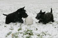 Barney-and-Miss-Beazley-Snow---F120507SC-0036