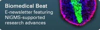 Biomedical Beat: A monthly digest of research News from NIGMS
