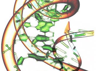 Genome illustration
