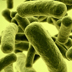 Illustration of rod-shaped bacteria.