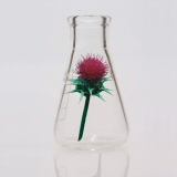 Erlenmeyer flask containing a red thistle flower