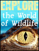 Explore the World of Wildlife