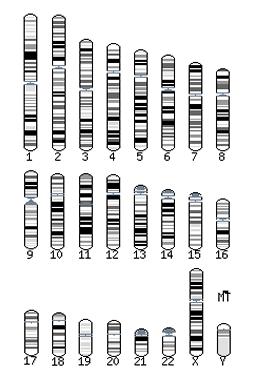 Human Karyotype
