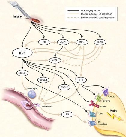 Illustration of genetic mechanisms of injury and pain
