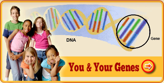 You and Your Genes
