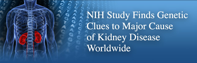 NIH Study Finds Genetic Clues to Major Cause of Kidney Disease Worldwide