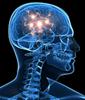 Brain stem cell environment